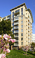 Apartment Building with Magnolia Flowers