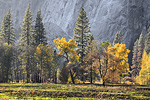 Fall Colors Yosemite Valley across the Meadow